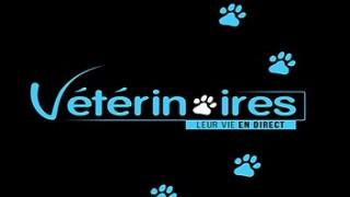 Vétérinaires leur vie en direct, Vidéo du 20 Mars 2016